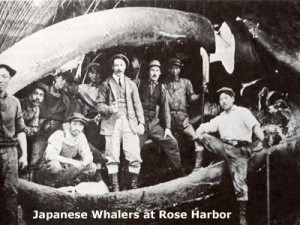 Japanese Whalers at Rose Harbor